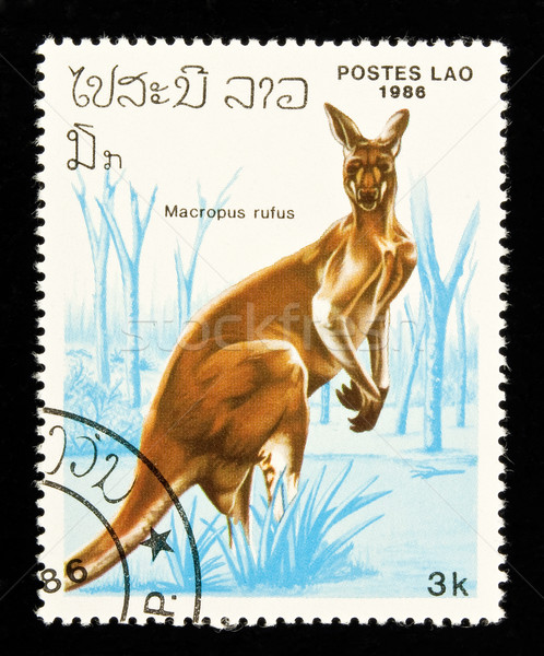 Kangaroo stamp. Stock photo © FER737NG