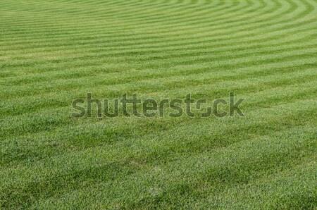 Green grass pattern. Stock photo © FER737NG