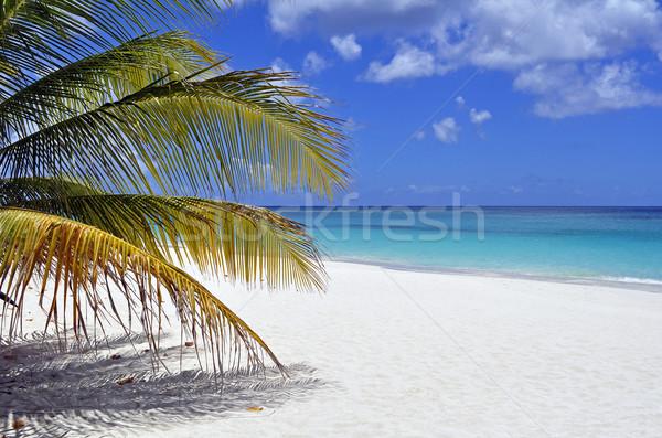 Karib tengerpart fantasztikus kilátás nyár pálma Stock fotó © FER737NG