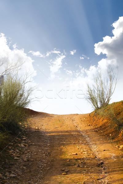 Forêt coucher du soleil paysage été domaine Photo stock © Fernando_Cortes