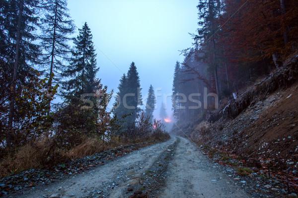Misty morning scene  Stock photo © Fesus