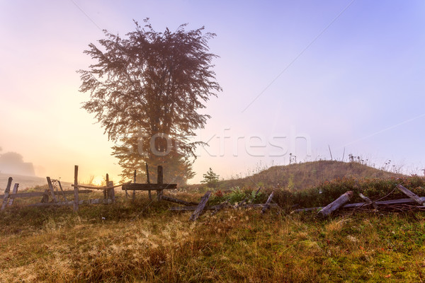 Magical sunrise Stock photo © Fesus