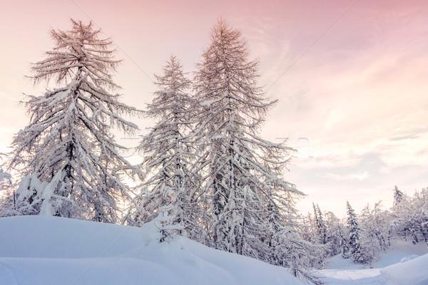 Tél tájkép hegyek Alpok Szlovénia fa Stock fotó © Fesus