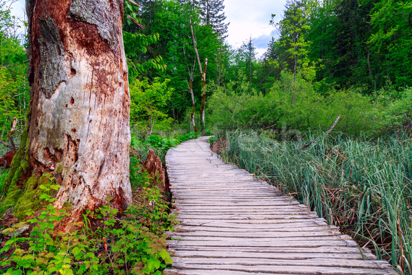 Forest pathway Stock photo © Fesus