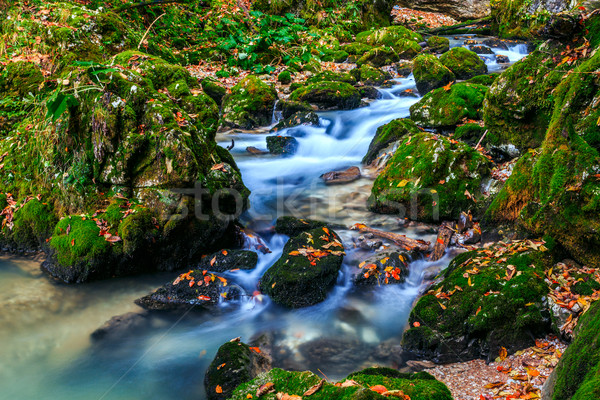 River cascade in a forest in Transylvania mountains Stock photo © Fesus