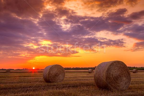 Naplemente farm mező széna fotó gyártmány Stock fotó © Fesus