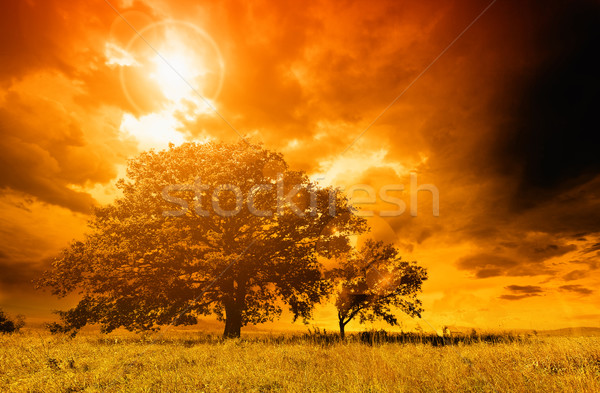 Stock photo: Lonely tree against a blue sky at sunset.