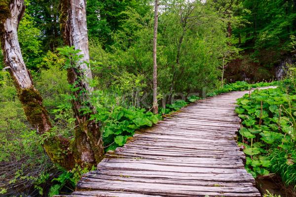 Erdő ösvény nyár út tájkép szépség Stock fotó © Fesus