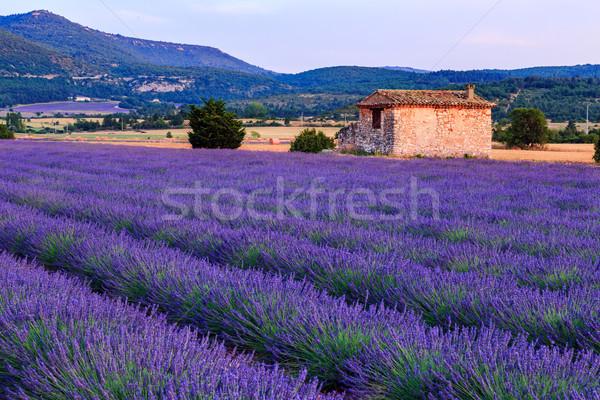 Lavender field summer sunset landscape near Sault Stock photo © Fesus