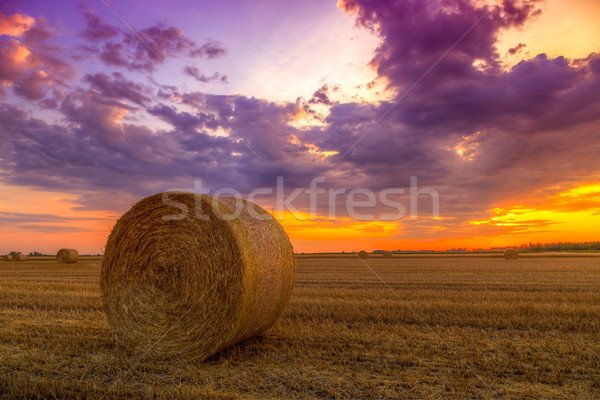 Sunset over farm field with hay bales Stock photo © Fesus