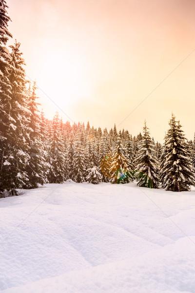 зима лес Альпы лыжных центр природы Сток-фото © Fesus