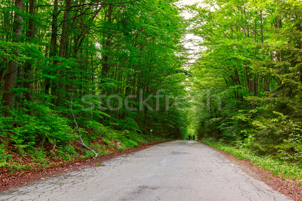 Green forest with pathway in sprintime Stock photo © Fesus