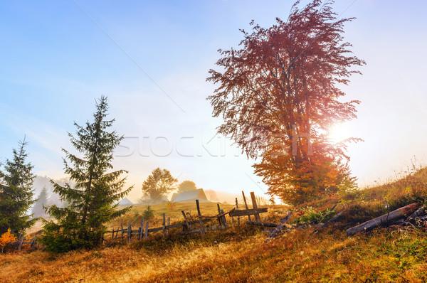 Magical sunrise with tree in Transylvania mountains Stock photo © Fesus