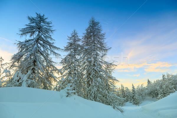 зима лес Альпы небе центр Словения Сток-фото © Fesus