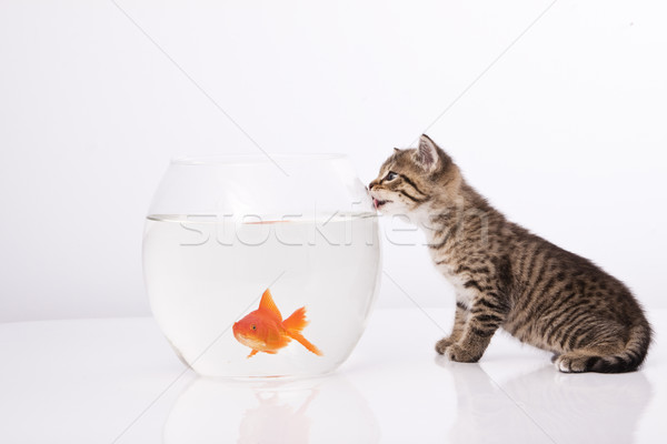Stock photo: Home cat and a gold fish