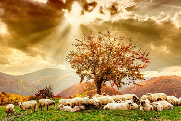 羊 ツリー 劇的な 空 聖書 シーン ストックフォト © Fesus