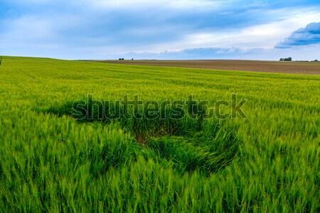 Wheat field  Stock photo © Fesus