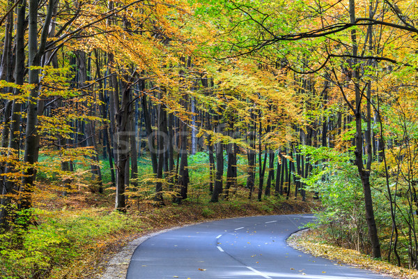Road in autumn forest Stock photo © Fesus