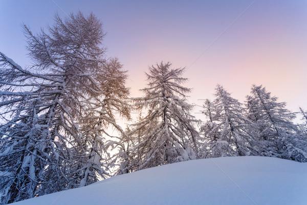 зима лес Альпы гор Словения древесины Сток-фото © Fesus