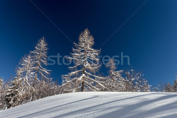 Winter landscape Stock photo © Fesus