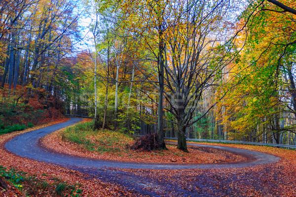 Road in autumn beech landscape Stock photo © Fesus