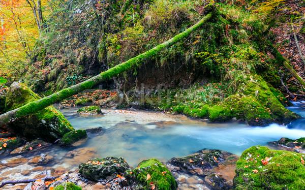Foto stock: Enseada · profundo · montanha · floresta · primavera · verde