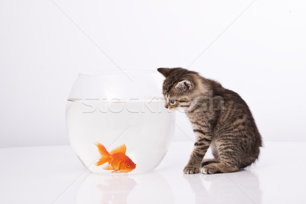 Maison chat or poissons eau verre Photo stock © Fesus