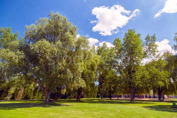 風景 湖 バラトン湖 ハンガリー 雲 草 ストックフォト © Fesus