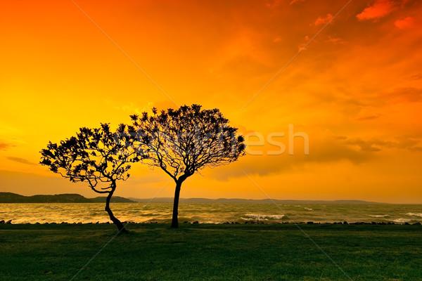 Wygaśnięcia drzewo wody pomarańczowy jezioro sylwetka Zdjęcia stock © Fesus