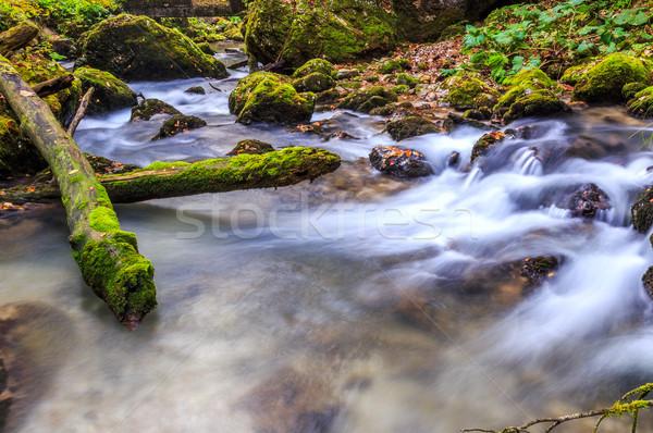 小川 深い 山 森林 水 木材 ストックフォト © Fesus