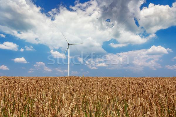 Vento campo de trigo Romênia tecnologia campo azul Foto stock © Fesus