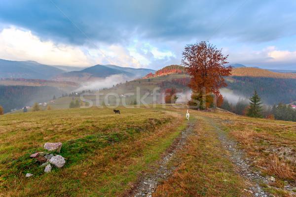 Brumeux matin arbre bois coucher du soleil feuille Photo stock © Fesus