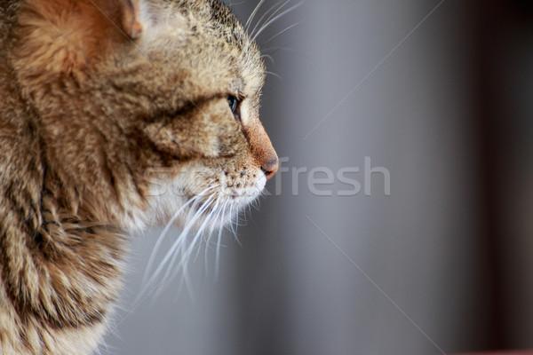 Gato retrato casa ao ar livre fundo Foto stock © Fesus