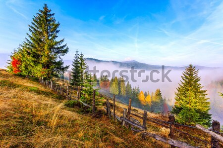 Foggy summer morning in the mountains Stock photo © Fesus