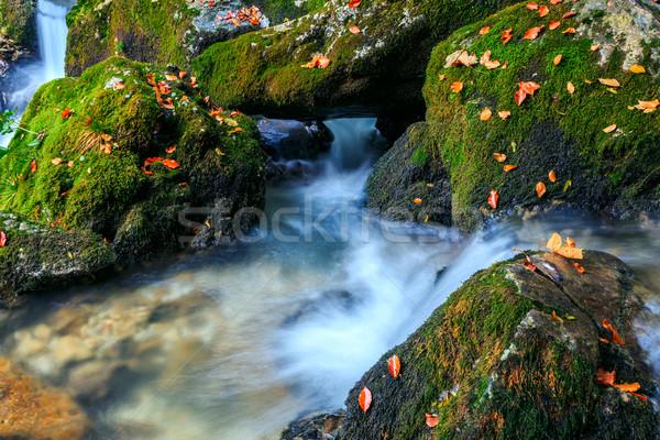 River cascade in a forest in Transylvania mountains Stock photo © Fesus