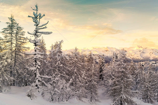 Winter forest in Julian Alps mountains Stock photo © Fesus