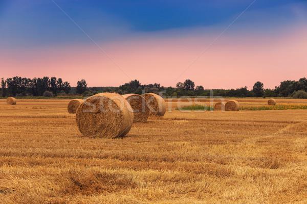 Stro dramatisch hemel Hongarije gras natuur Stockfoto © Fesus