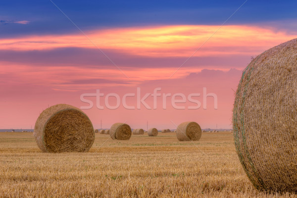 Palha dramático céu Hungria grama natureza Foto stock © Fesus