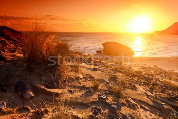Foto stock: Praia · naturalismo · parque · Espanha · paisagem · verão