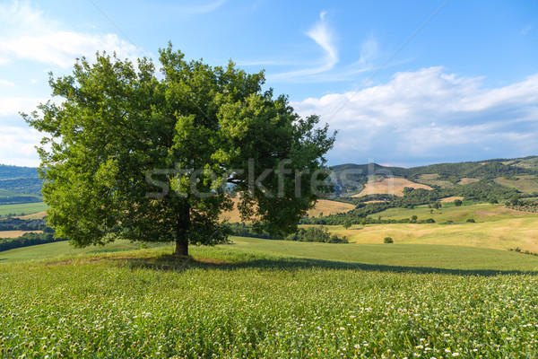 Beautiful landscape and lone tree Stock photo © Fesus