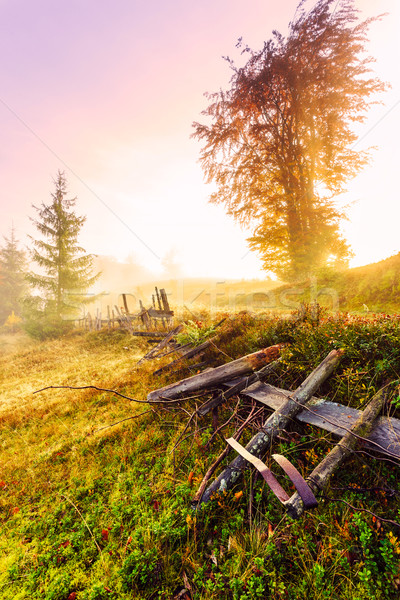 Magical sunrise with tree in Transylvania mountains Stock photo © Fesus