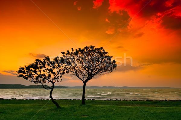 Coucher du soleil arbre eau orange lac silhouette Photo stock © Fesus