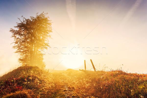 Sunrise morning in Carpathians mountain in Transylvania Stock photo © Fesus