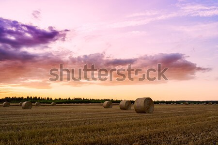 End of day over field with hay bale in Hungary Stock photo © Fesus
