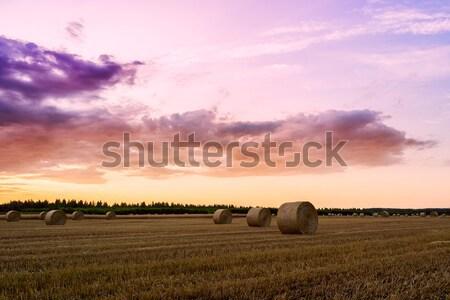 Jour domaine foin bale Hongrie Photo stock © Fesus
