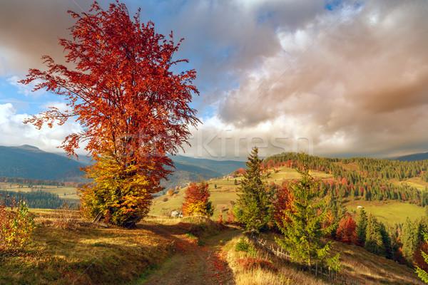 Wonderful autumn hillside in Transylvania Stock photo © Fesus