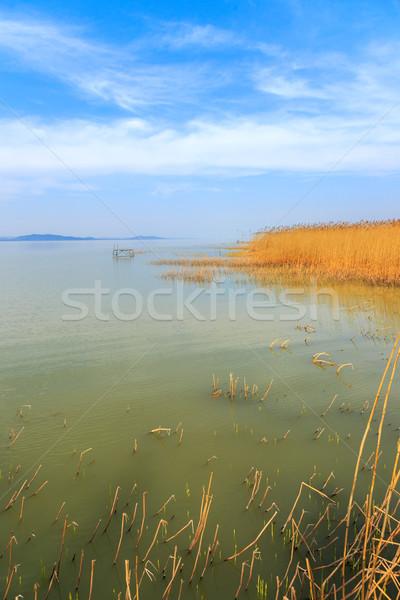 Lac Balaton Hongrie été arbre sport Photo stock © Fesus