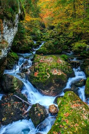 Foto stock: Enseada · profundo · montanha · floresta · água · madeira