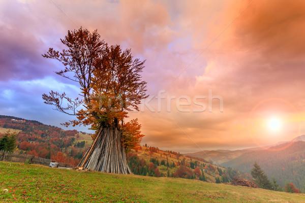 Dramatisch zonsopgang eenzaam boom najaar Stockfoto © Fesus