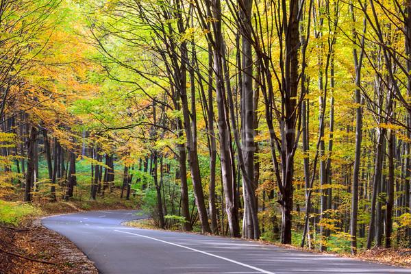Drogowego jesienią lasu krajobraz Węgry drewna Zdjęcia stock © Fesus